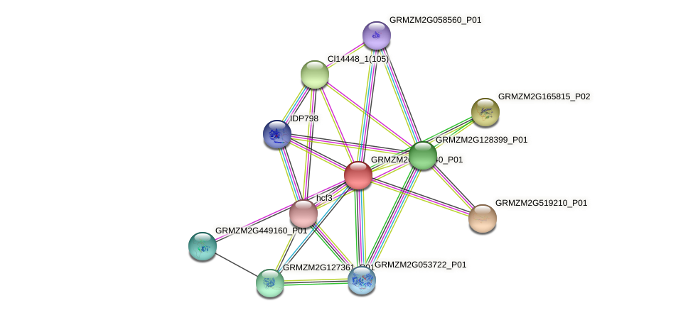 GRMZM2G125140_P01 protein (Zea mays) - STRING interaction network