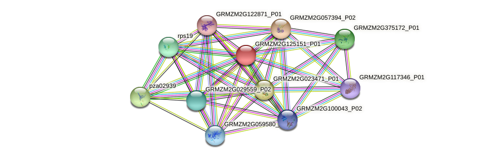 GRMZM2G125151_P01 protein (Zea mays) - STRING interaction network