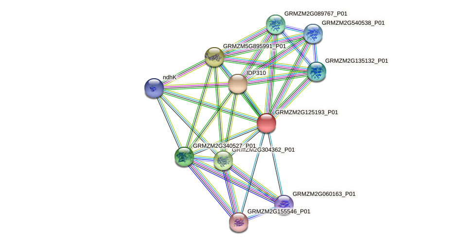 GRMZM2G125193_P01 protein (Zea mays) - STRING interaction network