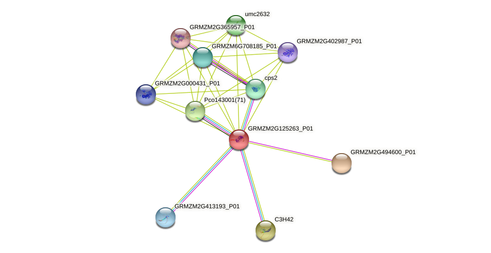Zm.147459 protein (Zea mays) - STRING interaction network
