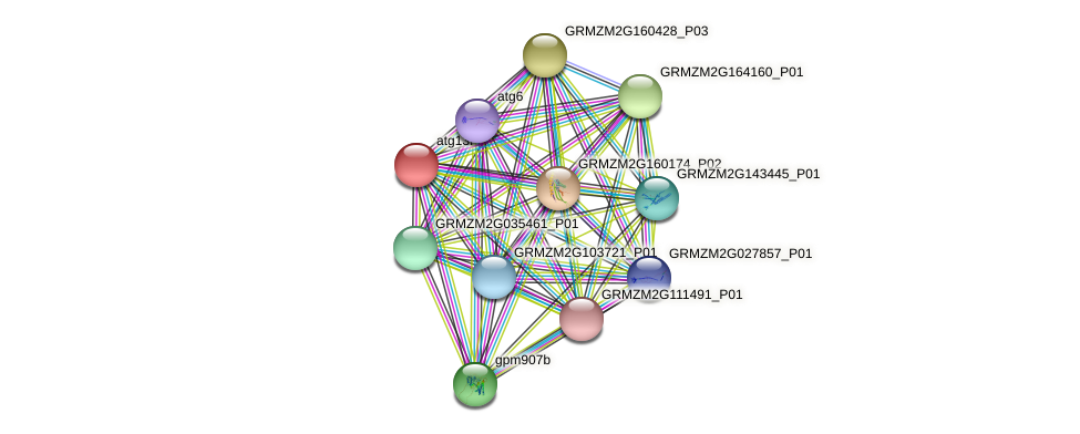 GRMZM2G125352_P01 protein (Zea mays) - STRING interaction network