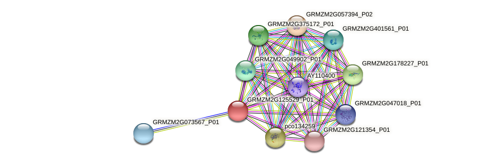 GRMZM2G125529_P01 protein (Zea mays) - STRING interaction network
