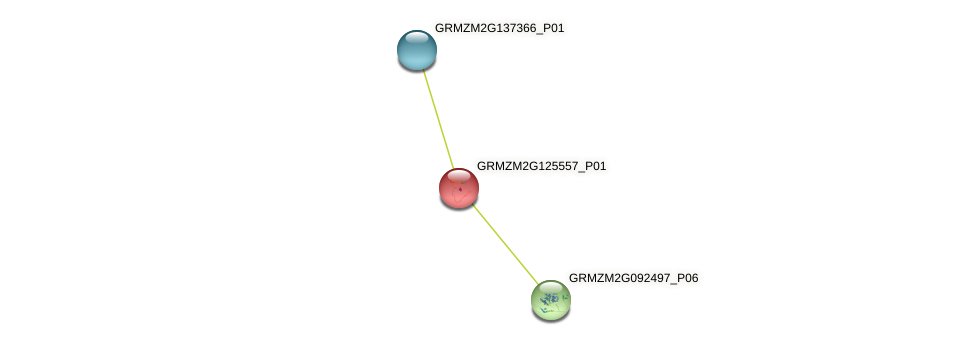 GRMZM2G125557_P01 protein (Zea mays) - STRING interaction network