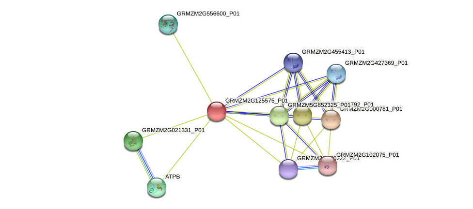 GRMZM2G125575_P01 protein (Zea mays) - STRING interaction network