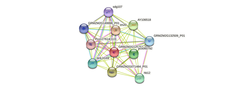 GRMZM2G125762_P01 protein (Zea mays) - STRING interaction network