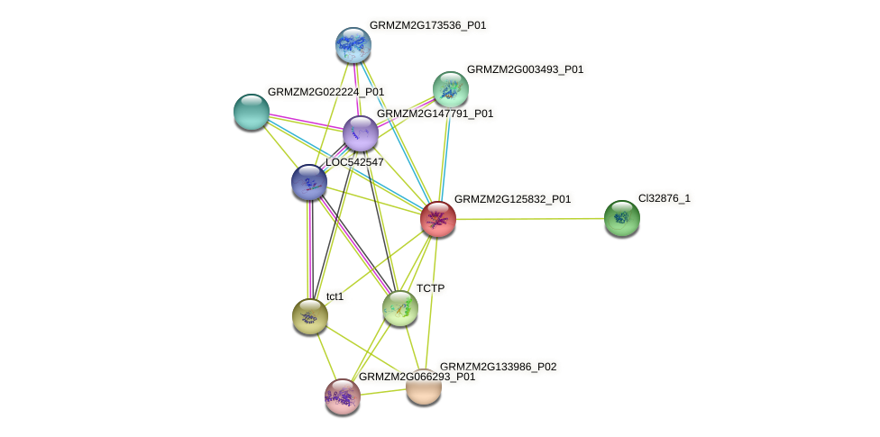 GRMZM2G125832_P01 protein (Zea mays) - STRING interaction network
