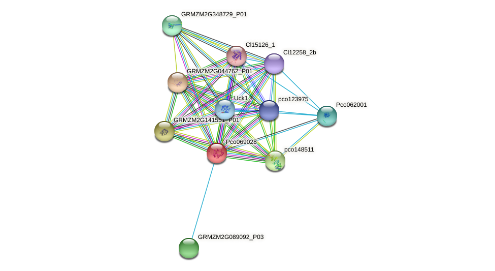 GRMZM2G125893_P01 protein (Zea mays) - STRING interaction network