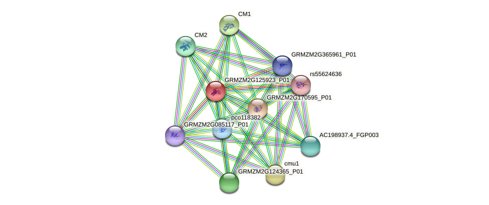 GRMZM2G125923_P01 protein (Zea mays) - STRING interaction network