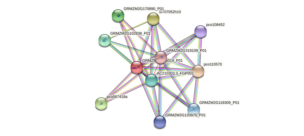 GRMZM2G126019_P01 protein (Zea mays) - STRING interaction network