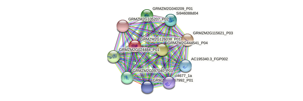GRMZM2G126038_P01 protein (Zea mays) - STRING interaction network