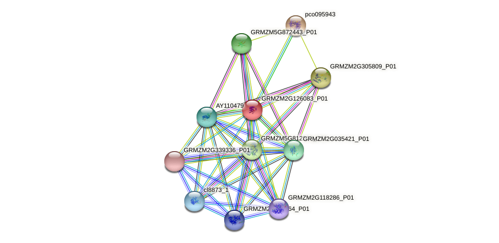 GRMZM2G126083_P01 protein (Zea mays) - STRING interaction network