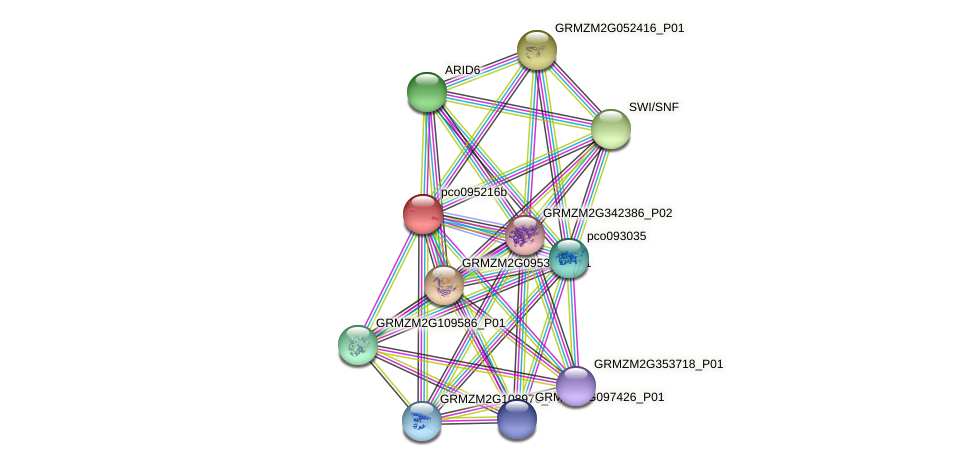 pco095216b protein (Zea mays) - STRING interaction network