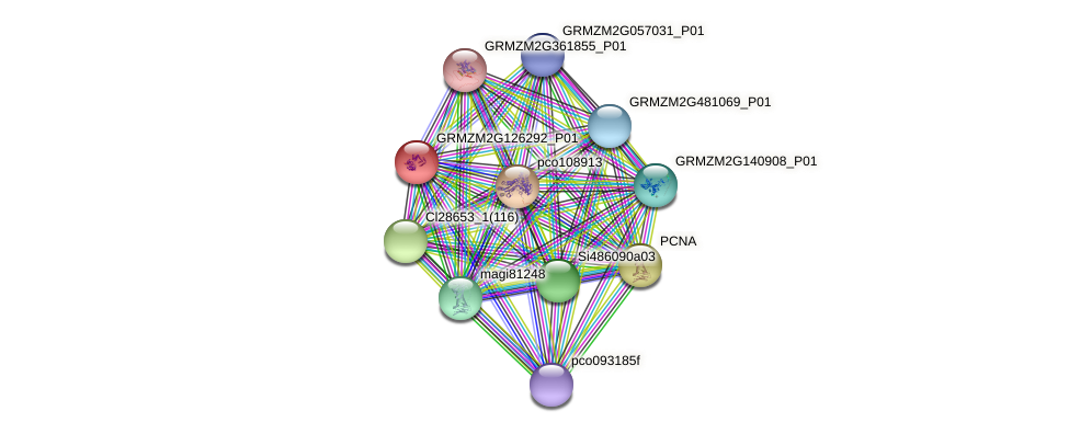 GRMZM2G126292_P01 protein (Zea mays) - STRING interaction network