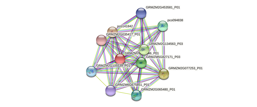 GRMZM2G126446_P01 protein (Zea mays) - STRING interaction network