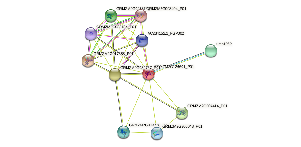 GRMZM2G126601_P01 protein (Zea mays) - STRING interaction network