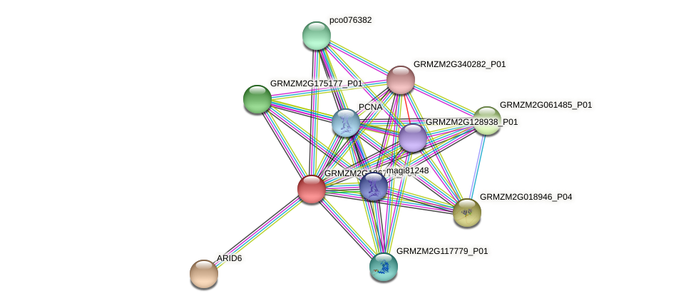 GRMZM2G126774_P04 protein (Zea mays) - STRING interaction network