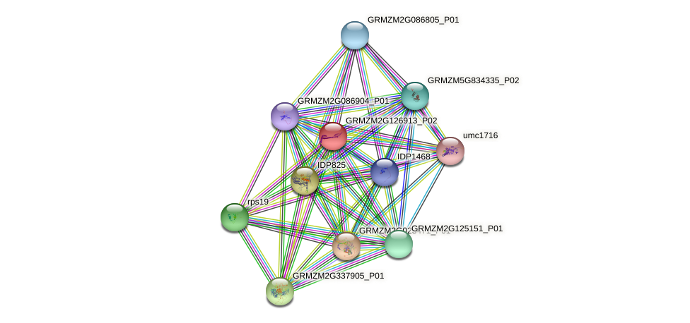GRMZM2G126913_P02 protein (Zea mays) - STRING interaction network