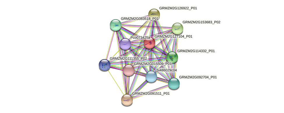 GRMZM2G127104_P01 protein (Zea mays) - STRING interaction network