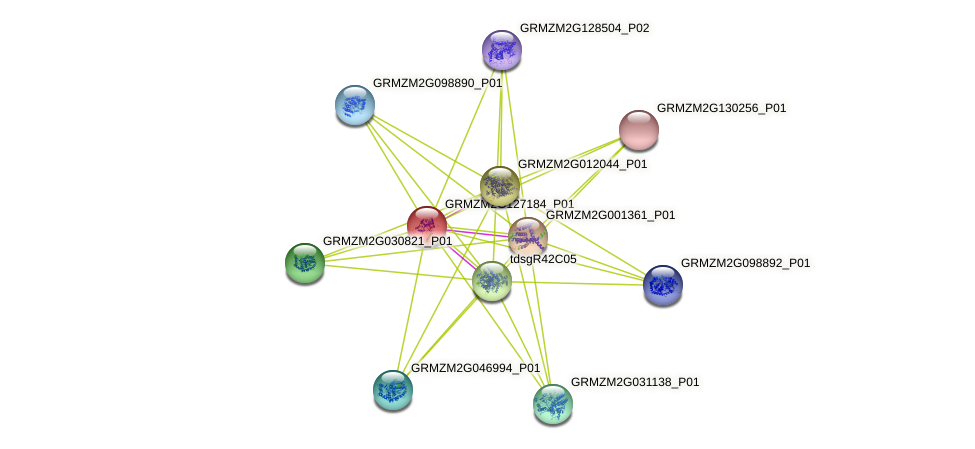 GRMZM2G127184_P01 protein (Zea mays) - STRING interaction network