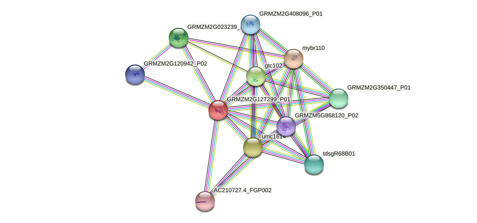 Zm.20529 protein (Zea mays) - STRING interaction network