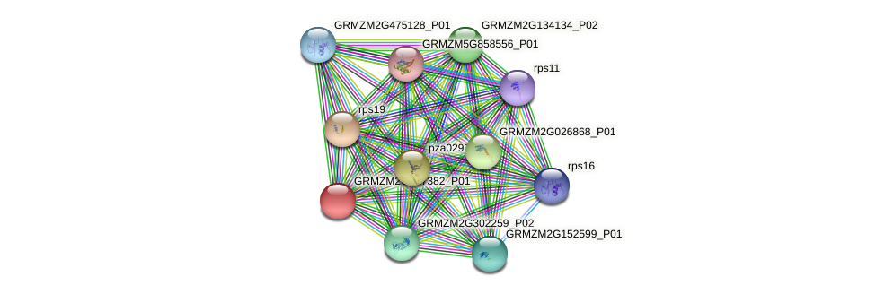 GRMZM2G127382_P01 protein (Zea mays) - STRING interaction network