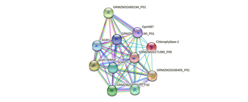 GRMZM2G127421_P01 protein (Zea mays) - STRING interaction network