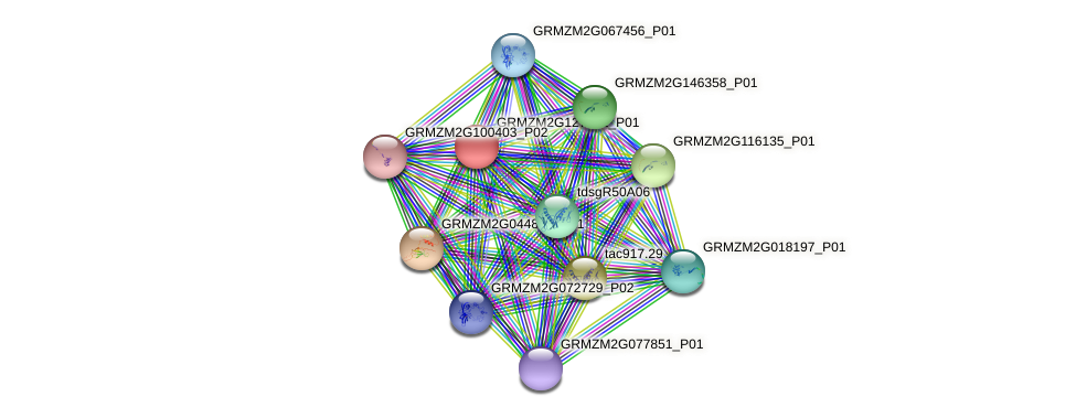 GRMZM2G127521_P01 protein (Zea mays) - STRING interaction network