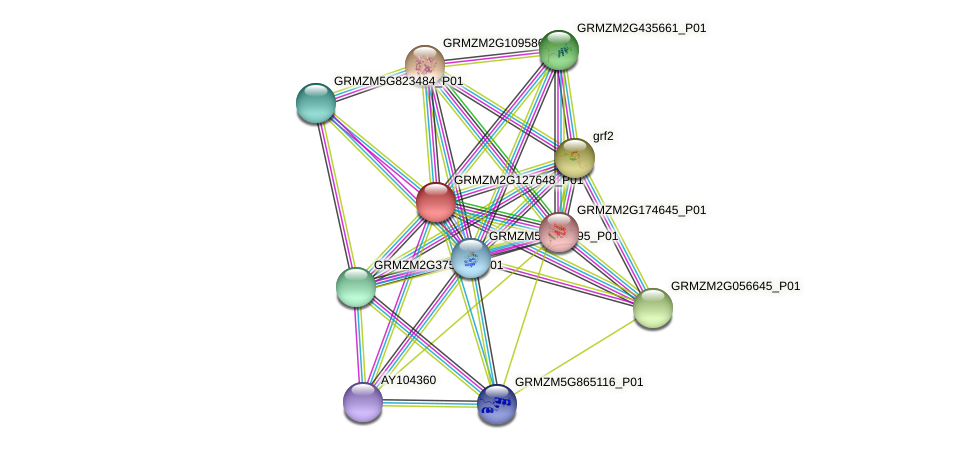 cl8907_1 protein (Zea mays) - STRING interaction network