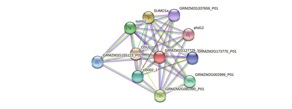 GRMZM2G127729_P01 protein (Zea mays) - STRING interaction network