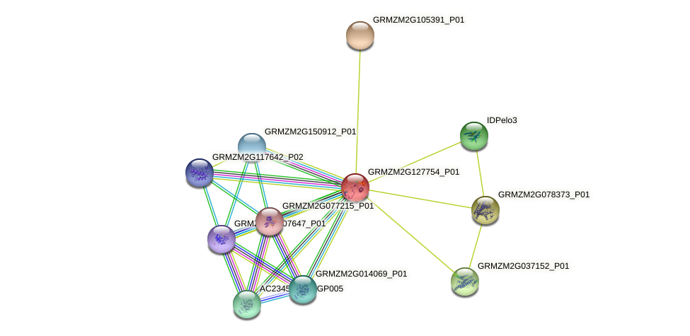 GRMZM2G127754_P01 protein (Zea mays) - STRING interaction network