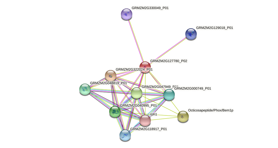 GRMZM2G127780_P02 protein (Zea mays) - STRING interaction network