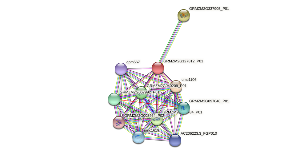 GRMZM2G127812_P01 protein (Zea mays) - STRING interaction network