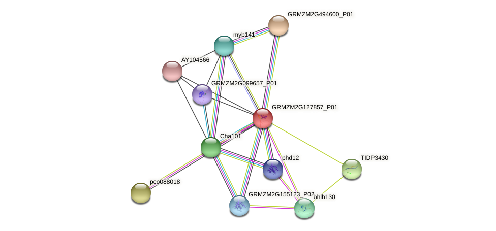 Zm.13866 protein (Zea mays) - STRING interaction network