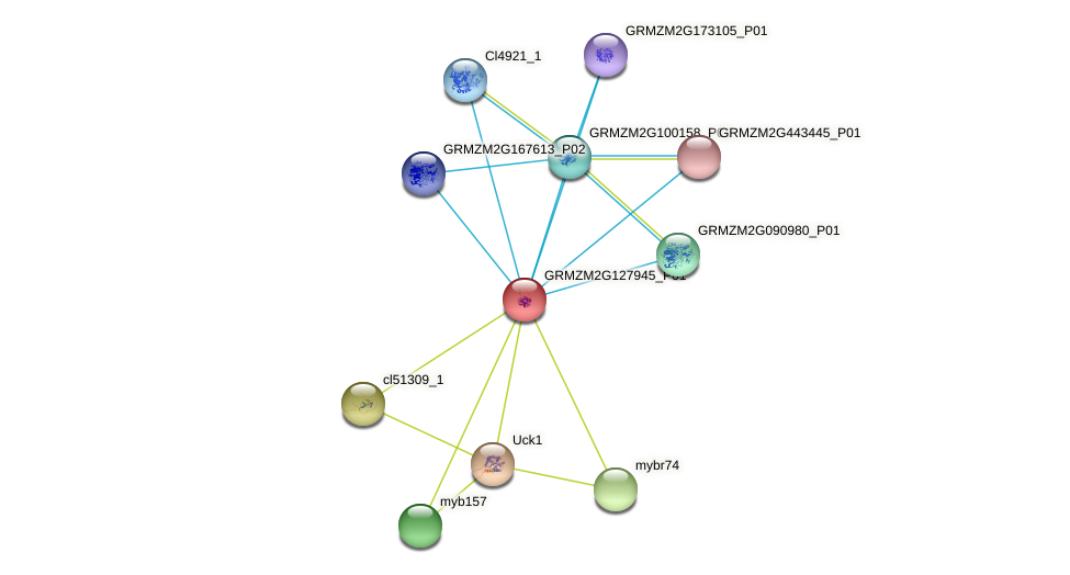 GRMZM2G127945_P01 protein (Zea mays) - STRING interaction network