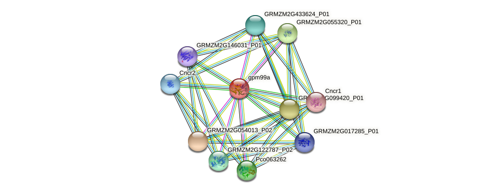 CCOAOMT1 protein (Zea mays) - STRING interaction network