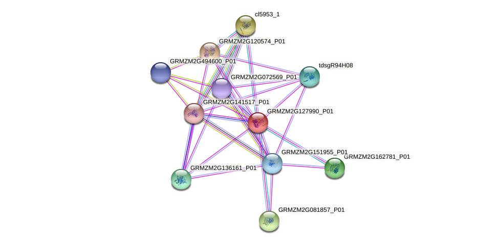 GRMZM2G127990_P01 protein (Zea mays) - STRING interaction network