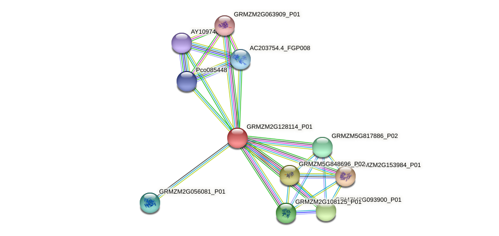 GRMZM2G128114_P01 protein (Zea mays) - STRING interaction network