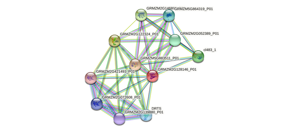 GRMZM2G128146_P01 protein (Zea mays) - STRING interaction network