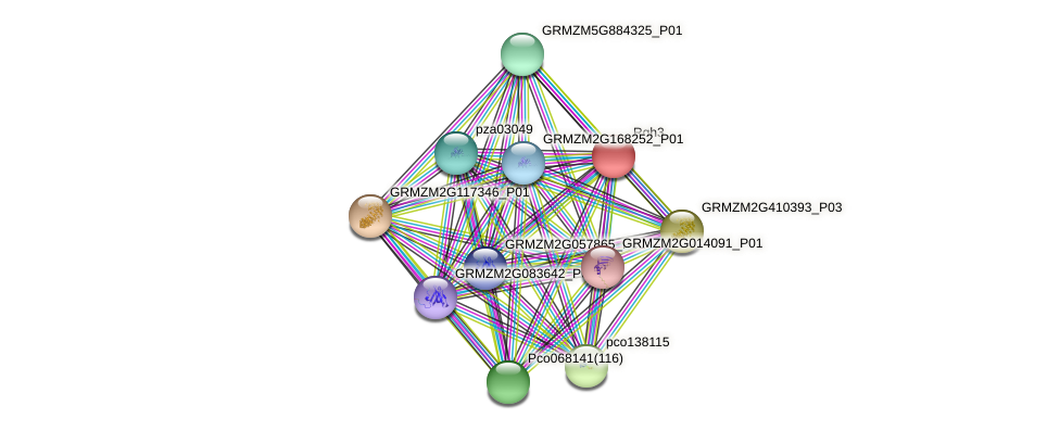 Rgh3 protein (Zea mays) - STRING interaction network