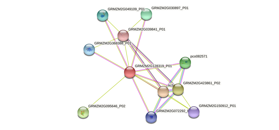 Zm.160675 protein (Zea mays) - STRING interaction network