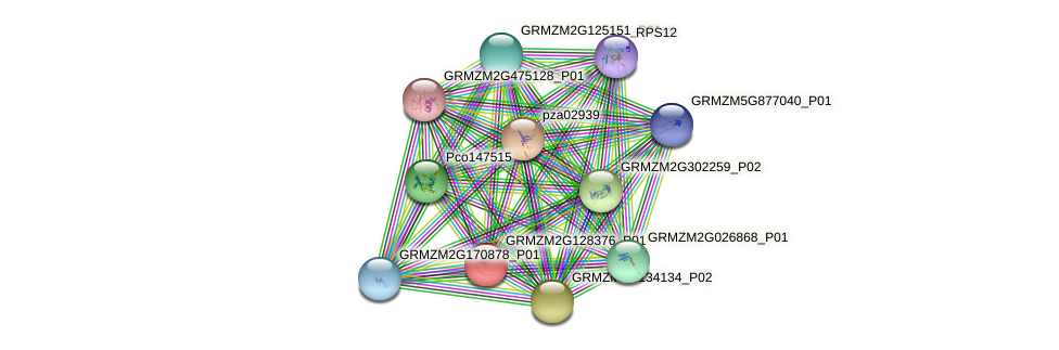 GRMZM2G128376_P01 protein (Zea mays) - STRING interaction network