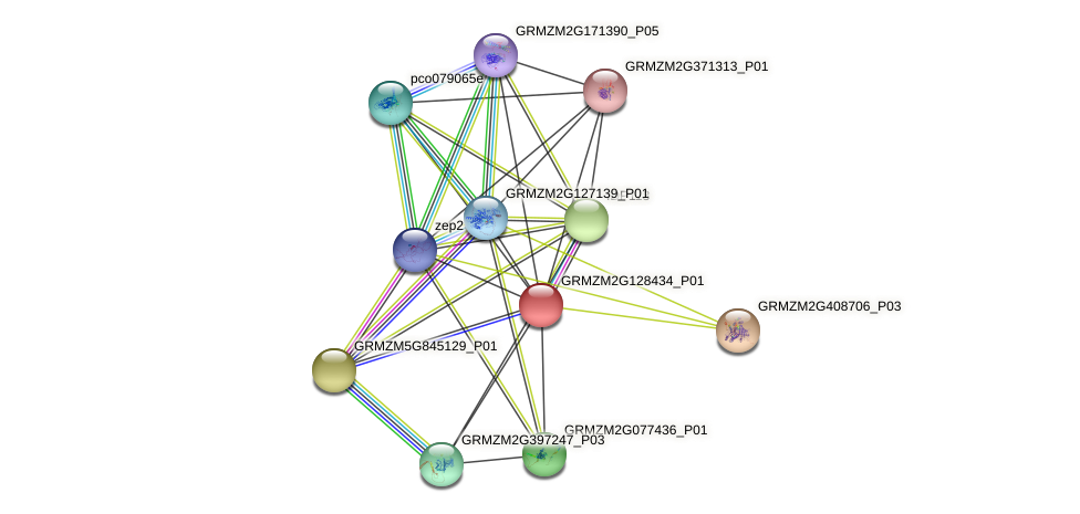 GRMZM2G128434_P01 protein (Zea mays) - STRING interaction network