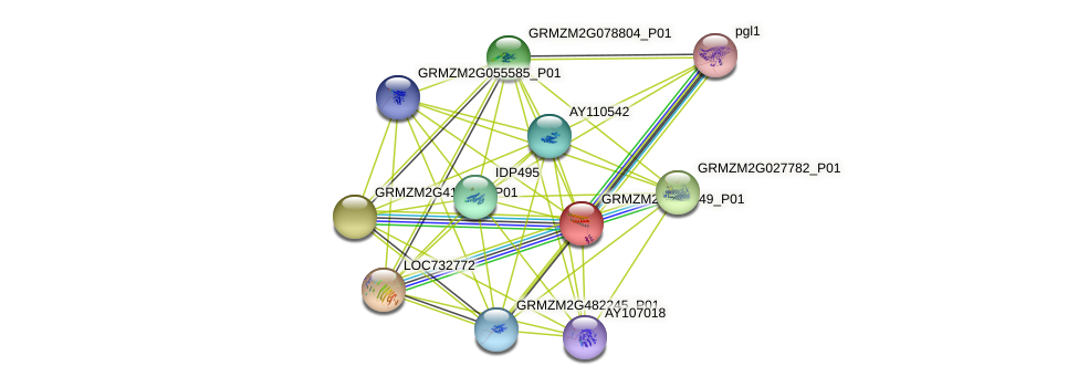 GRMZM2G128549_P01 protein (Zea mays) - STRING interaction network