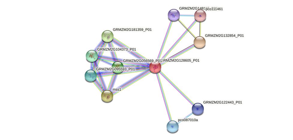 GRMZM2G128605_P01 protein (Zea mays) - STRING interaction network