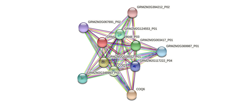 GRMZM2G128648_P03 protein (Zea mays) - STRING interaction network