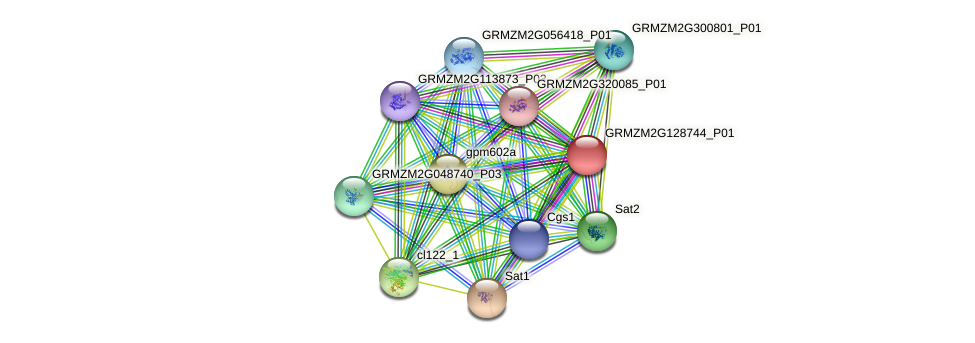 GRMZM2G128744_P01 protein (Zea mays) - STRING interaction network