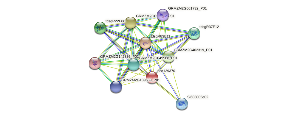 pco129370 protein (Zea mays) - STRING interaction network