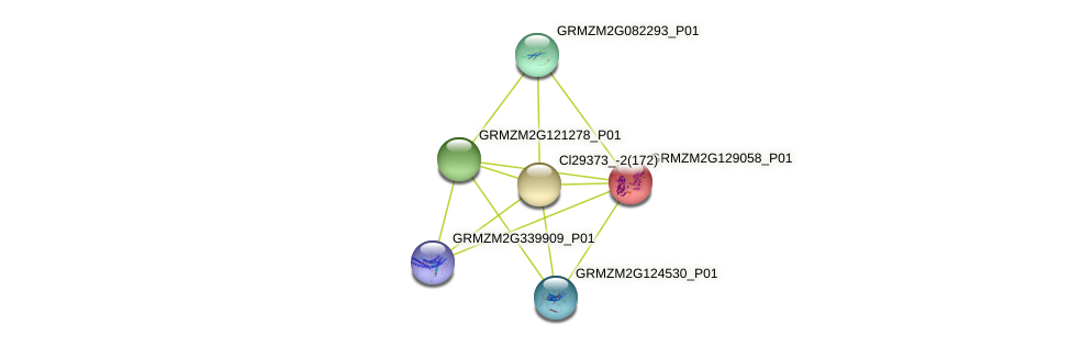 GRMZM2G129058_P01 protein (Zea mays) - STRING interaction network