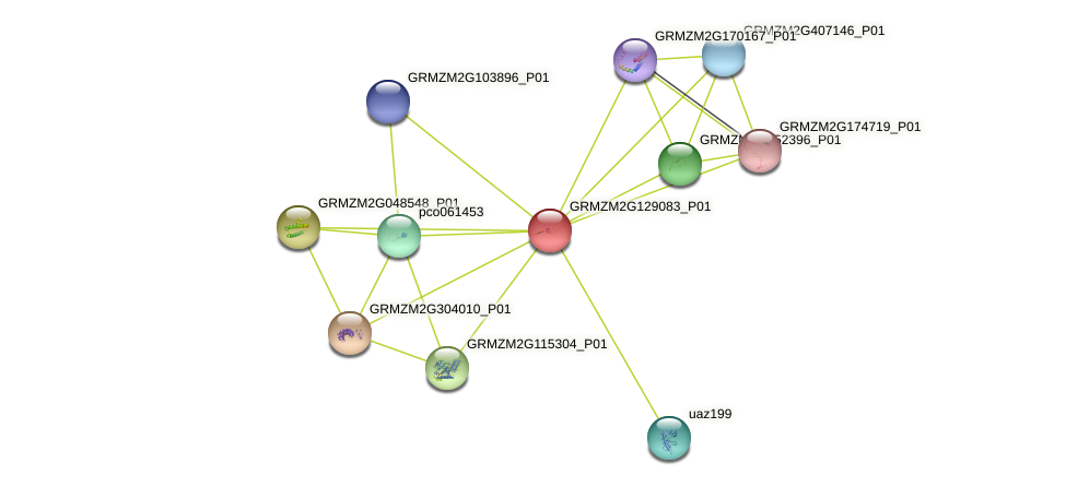GRMZM2G129083_P01 protein (Zea mays) - STRING interaction network