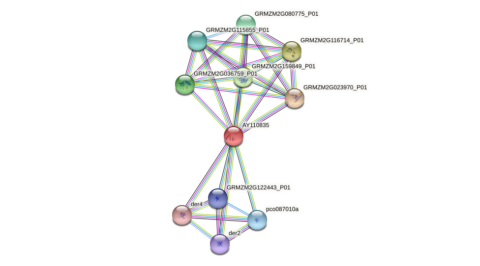 AY110835 protein (Zea mays) - STRING interaction network
